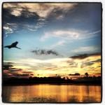 pelicanrise