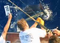 sailfishcrop.jpg